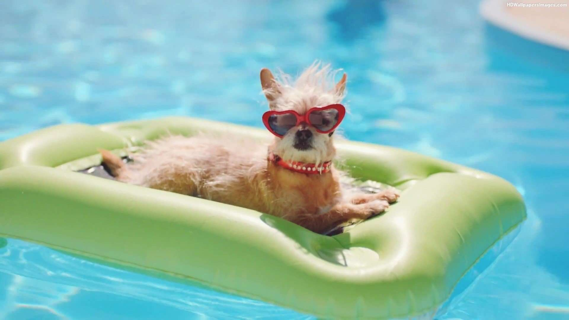 Do you know if your dog can swim?