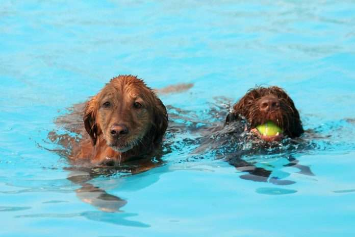 mans best friend and the pool can dogs use swimming pools