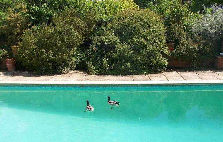 Ways to Keep Ducks Out Of Pool  HomeGearX